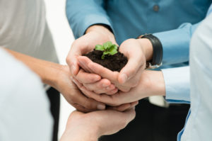 Closeup Of Businesspeople Hand Holding Plant Together